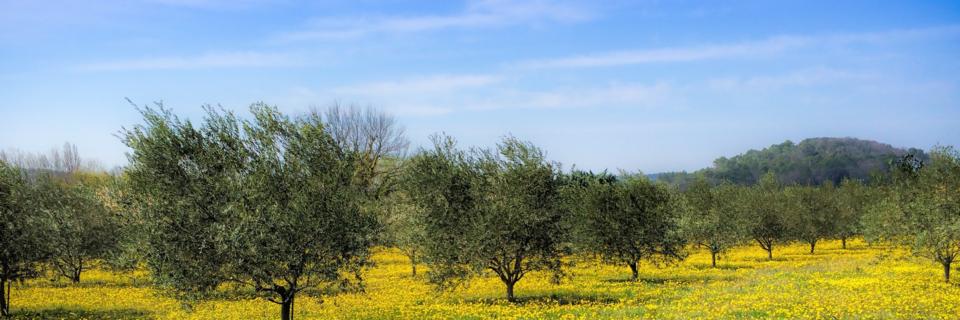 Miglioramento della qualità dell'olio, rispetto ambientale e sicurezza alimentare.