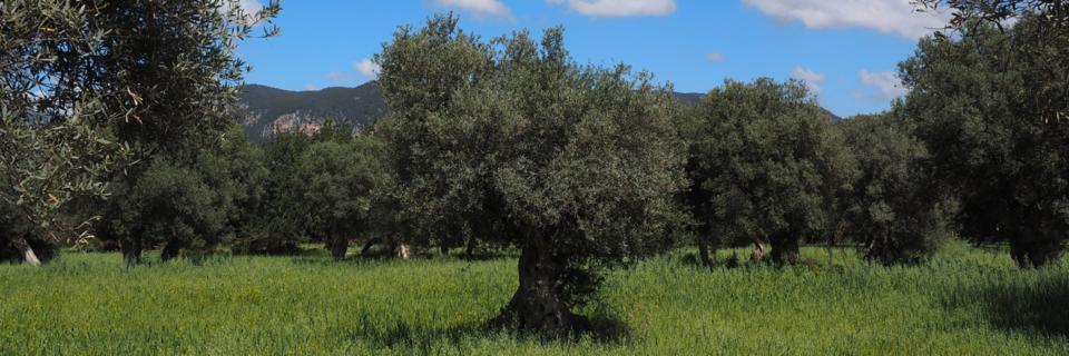 al servizio degli olivicoltori dal 1978